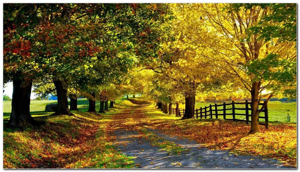 Autumn Season Nature Wallpaper Background Awesome