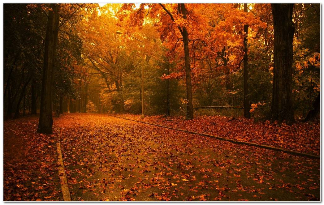 Autumn Season Nature Wallpaper Background Best