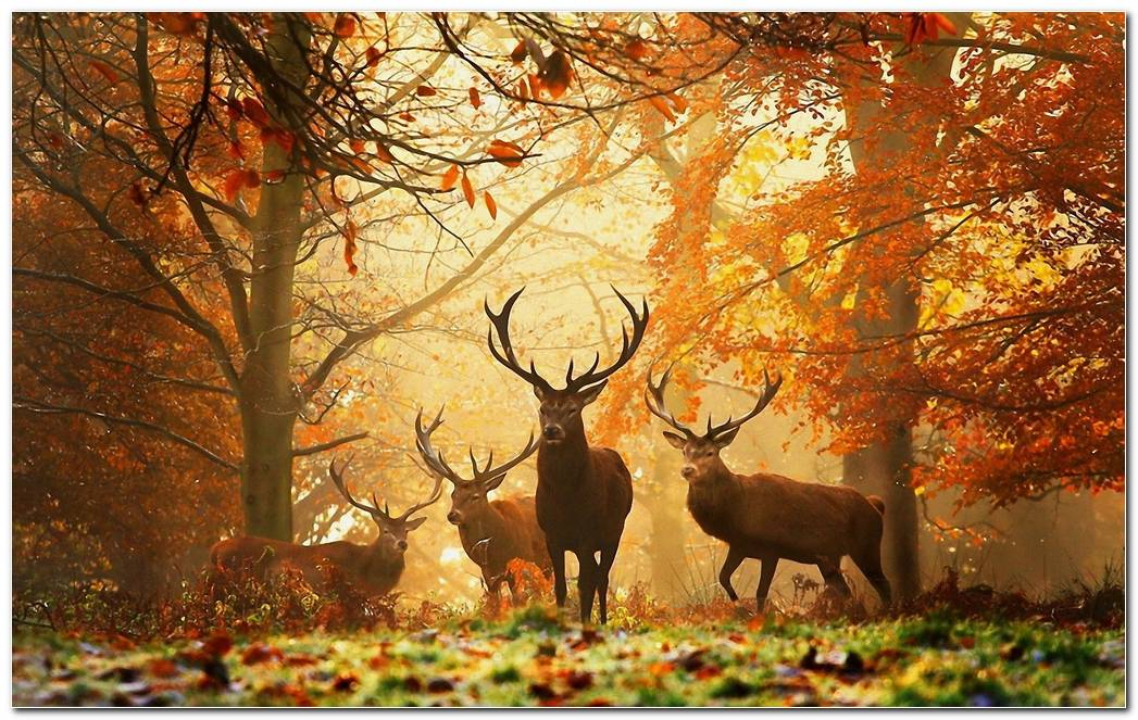 Autumn Season Nature Wallpaper Background Image Awesome