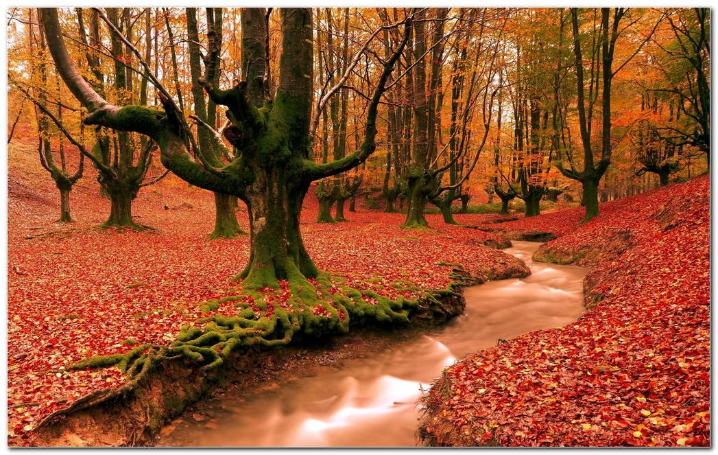 Autumn Season Nature Wallpaper Background Image Best