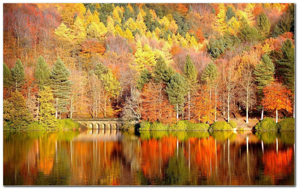 Autumn Season Nature Wallpaper Background Image