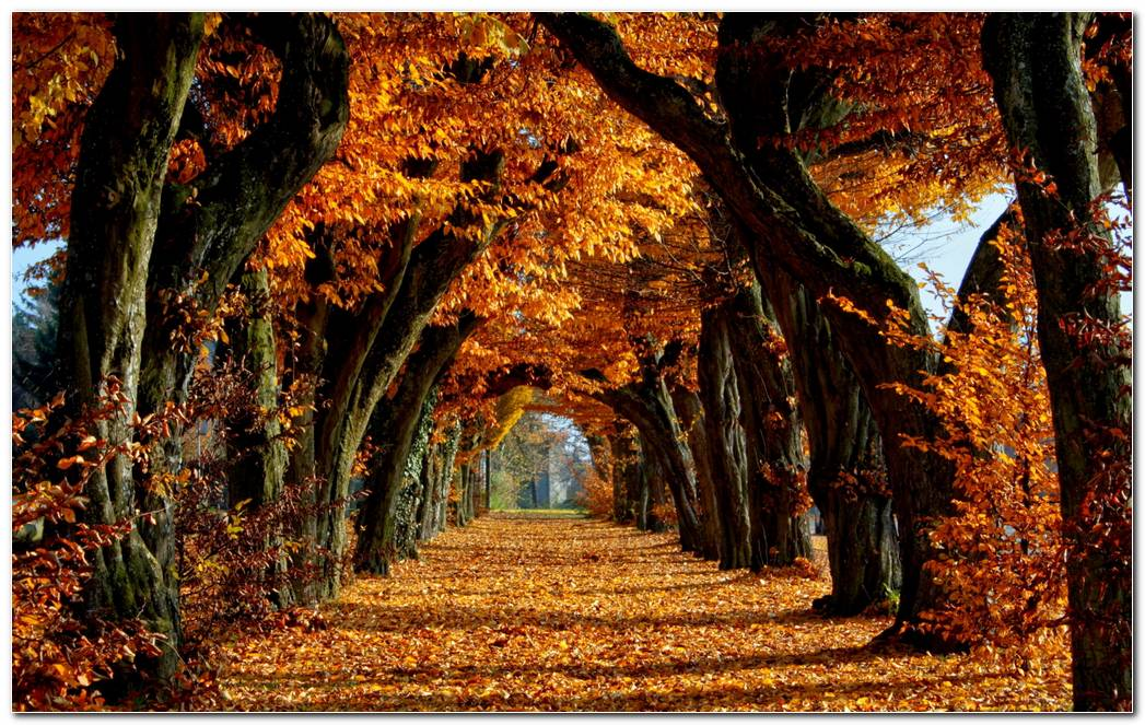 Autumn Season Nature Wallpaper Background Nice