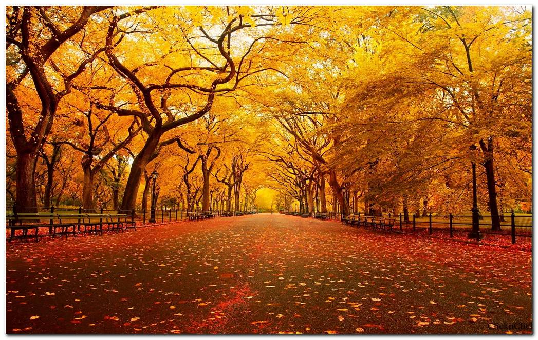 Autumn Season Nature Wallpaper Background Pictures