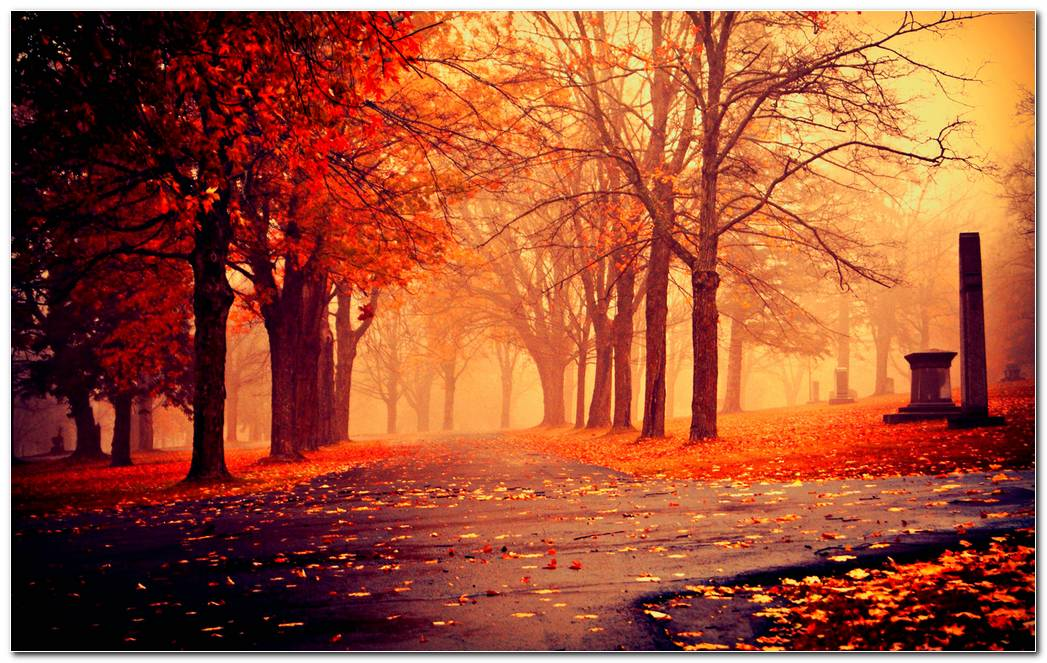 Autumn Season Nature Wallpaper Background