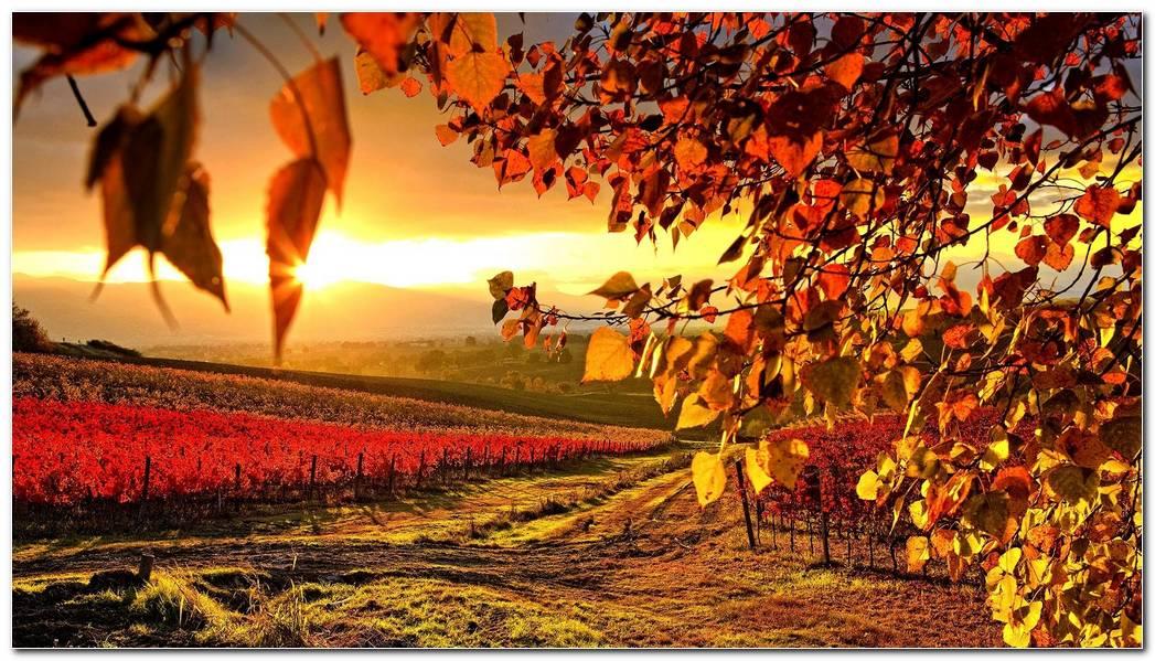 Autumn Season Nature Wallpaper Image Background