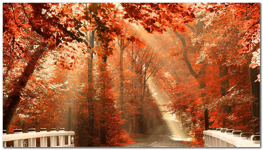Autumn Season Nature Wallpaper Picture Background