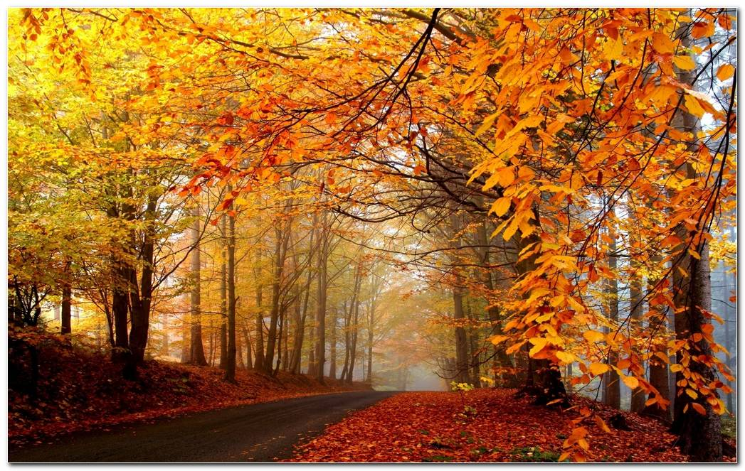 Autumn Season Road Nature Wallpaper Background
