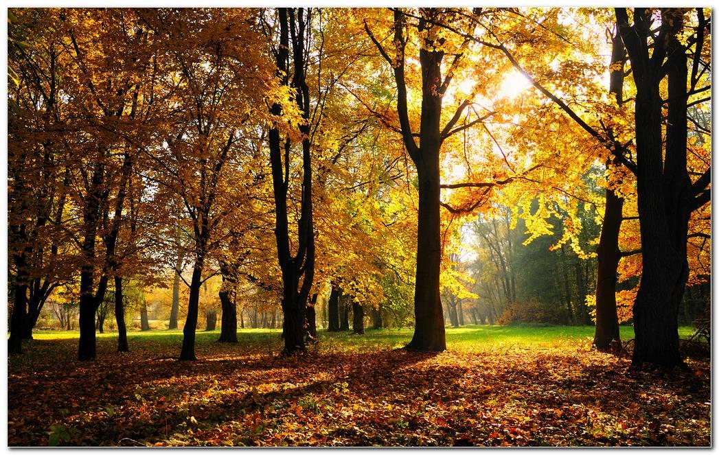 Autumn Season Wide Nature Wallpaper Background