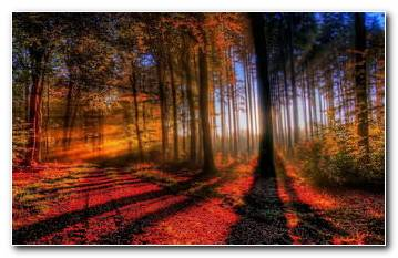 Autumn Sunset Backgrounds