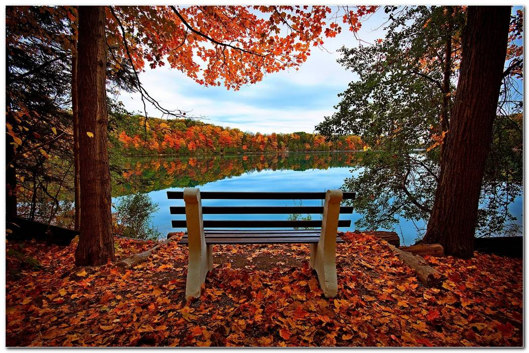 Autumn Wallpaper Bench River