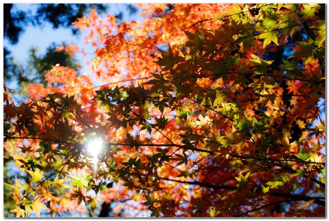 Autumn Wallpaper Foliage Trees Hd