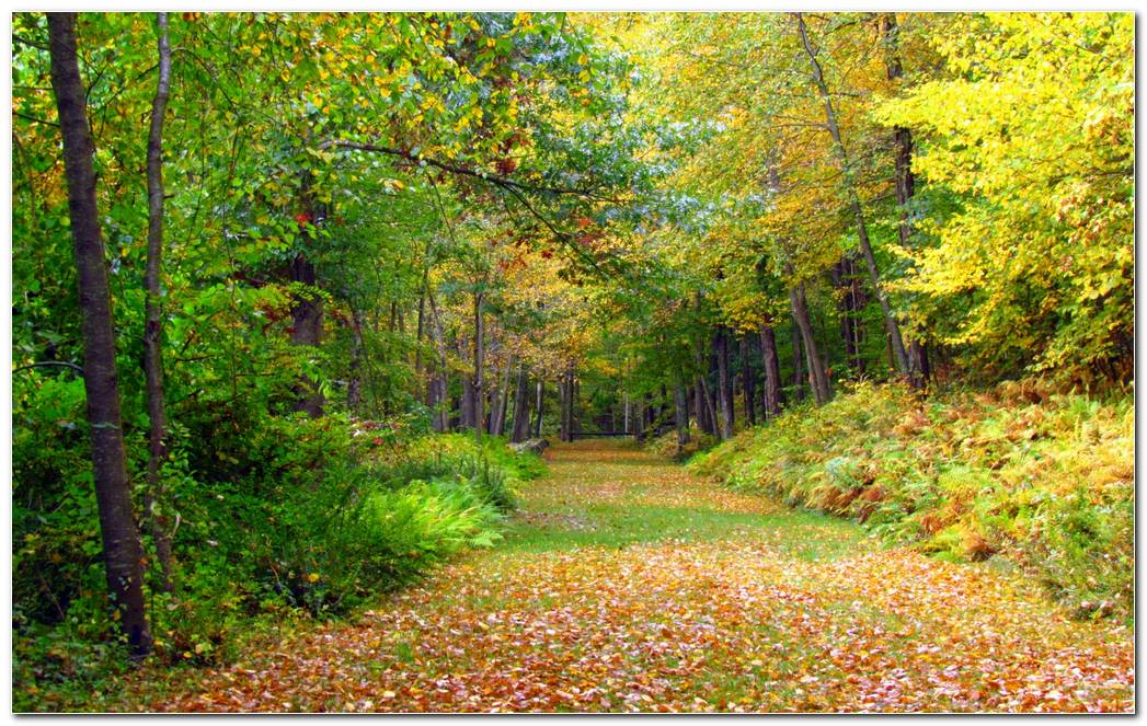Autumn Wallpaper Foliage Trees