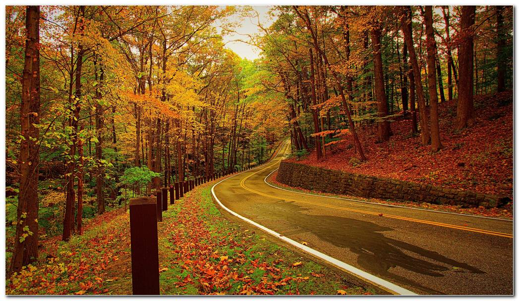 Autumn Wallpaper Forest Road