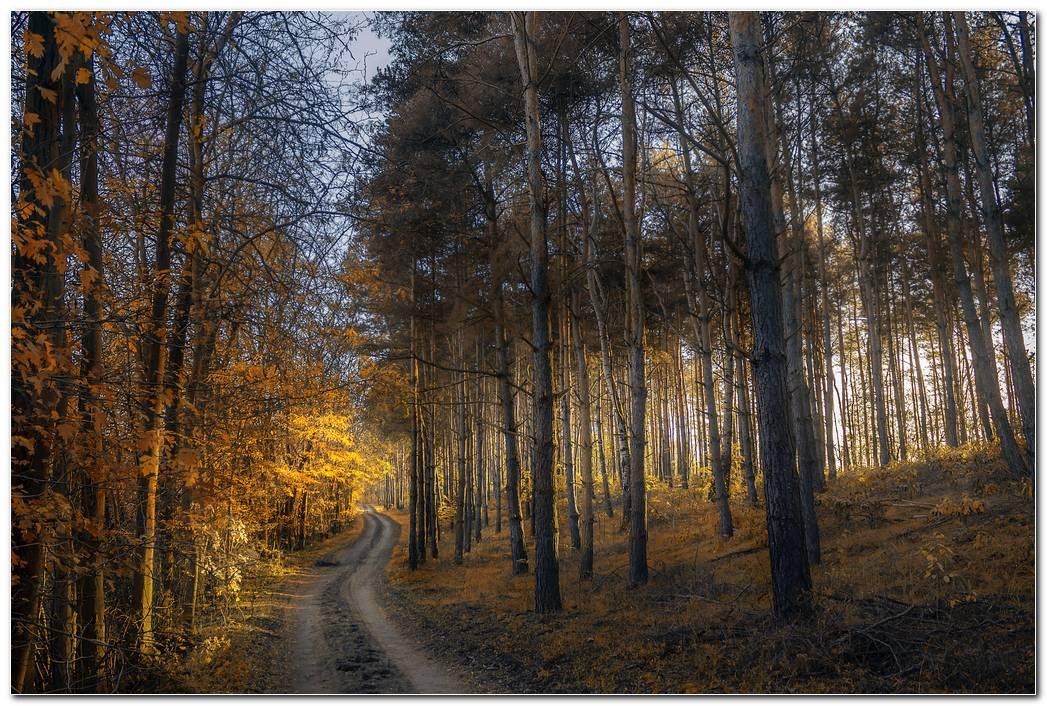 Autumn Wallpaper Forest Trail