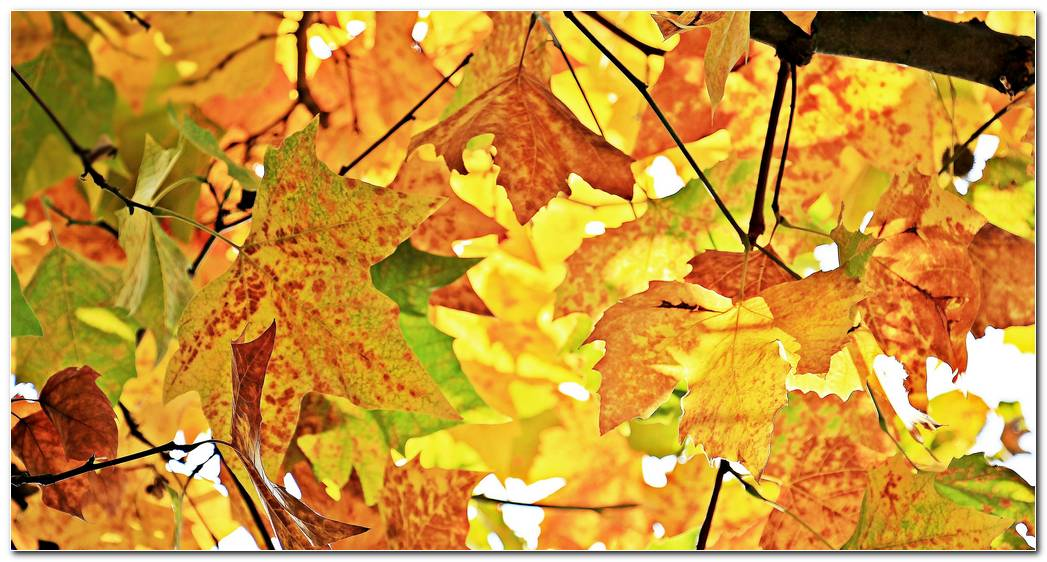 Autumn Wallpaper Leaves Branches