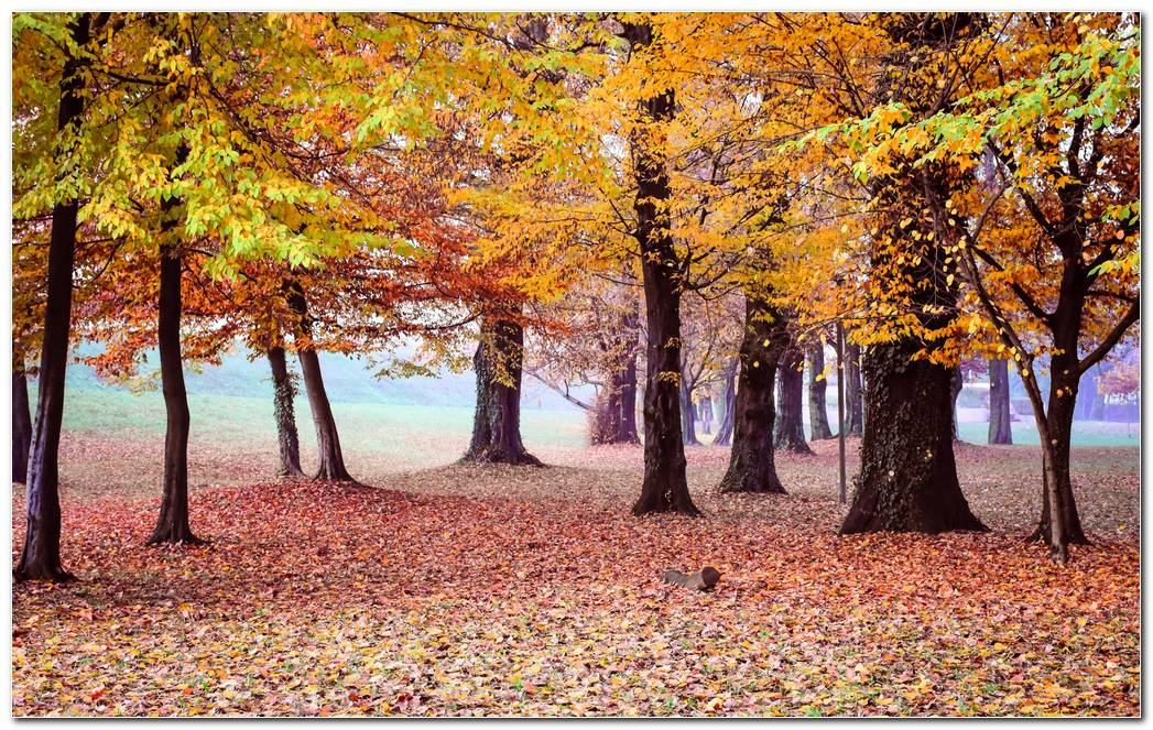Autumn Wallpaper Park Trees