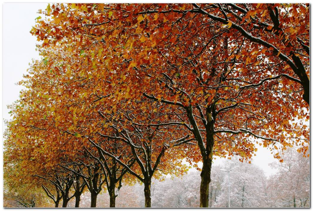 Autumn Wallpaper Trees Winter