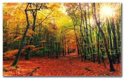 Autumn Fallings HD Wallpaper