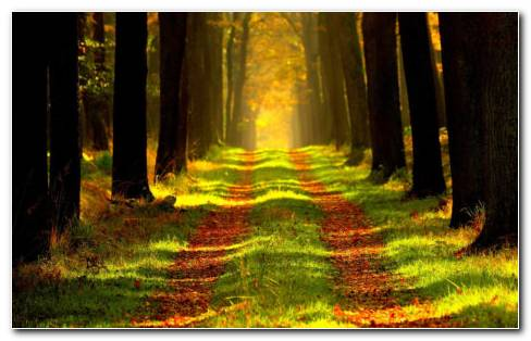 Autumn Path HD Wallpaper New