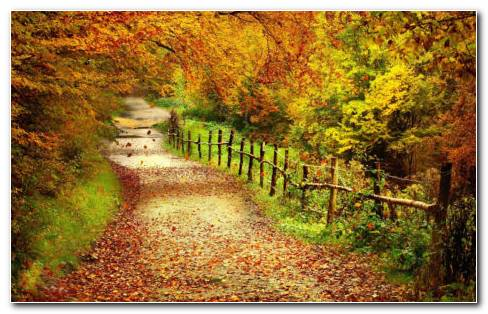 Autumn Path HD Wallpaper