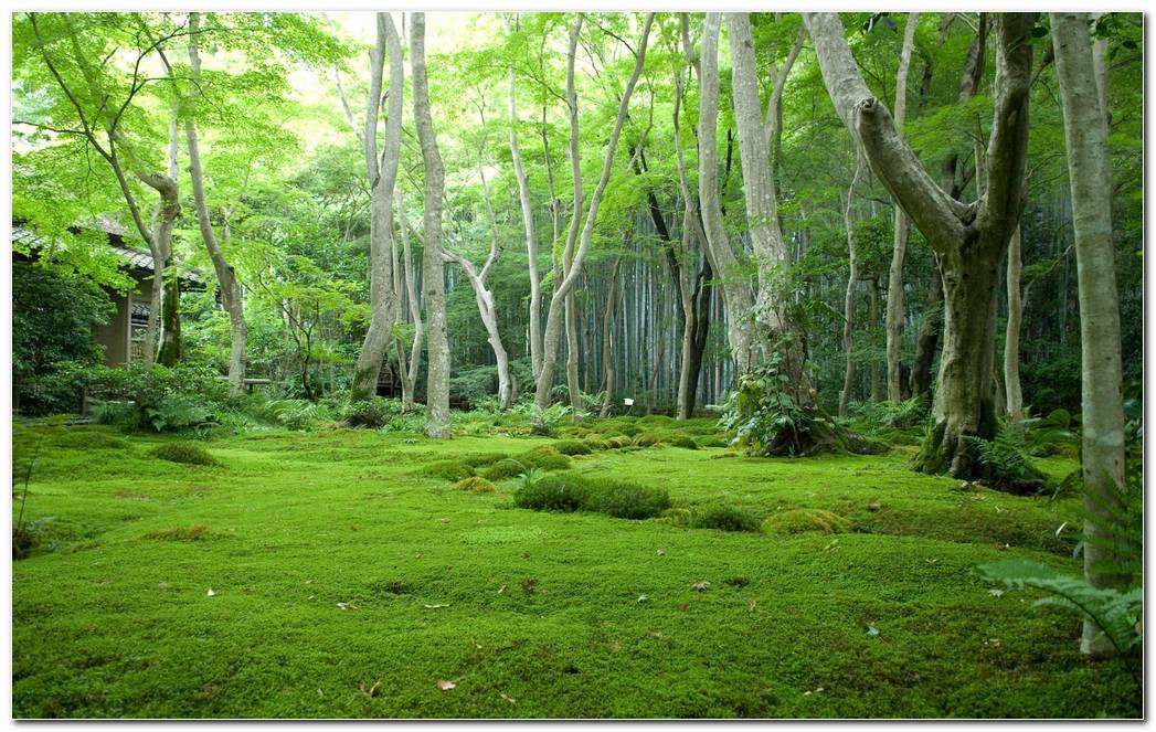 Awesome Green Forest Nature Wallpaper Background Image