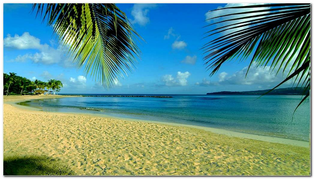 Awesome Tropical Nature Wallpaper Background Image