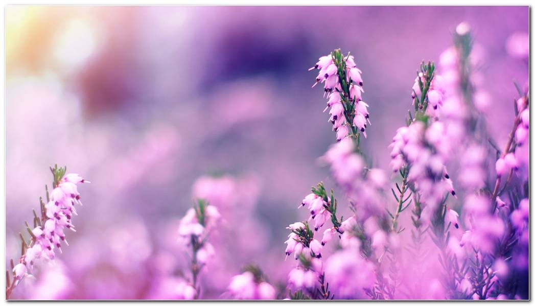 Awesome Wildflower Wallpapers Background Picture