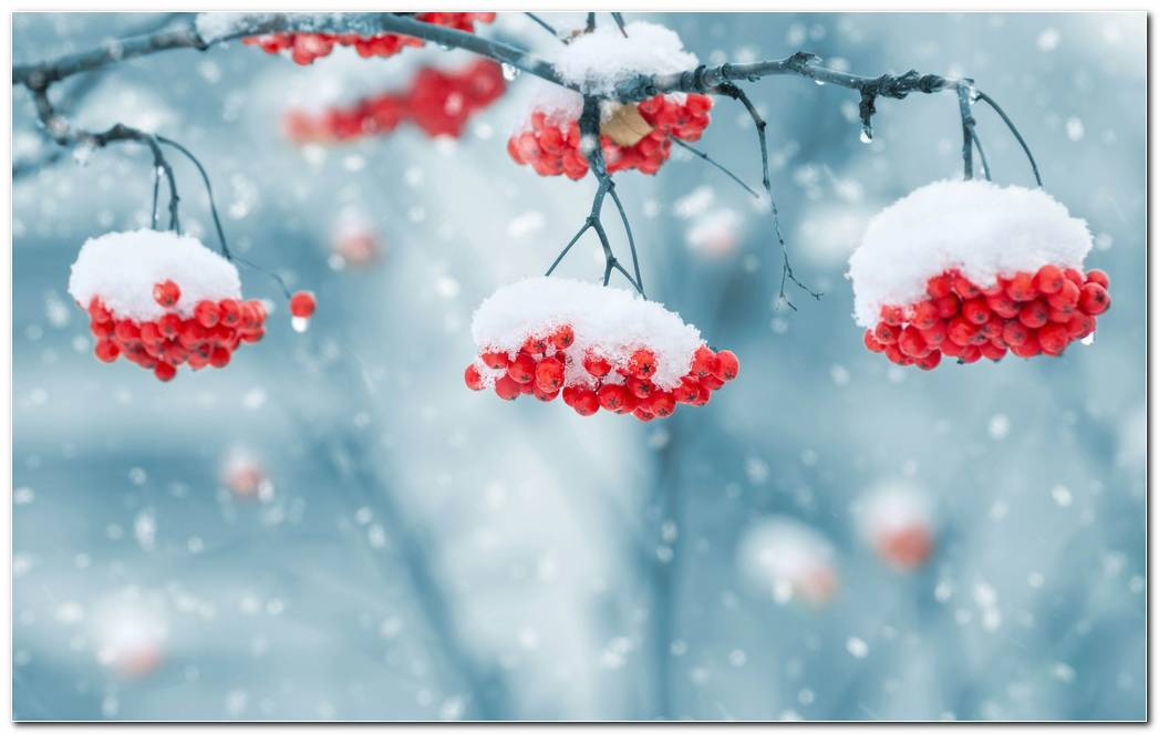 Awesome Winter Snow Nature Wallpaper Background Widescreen