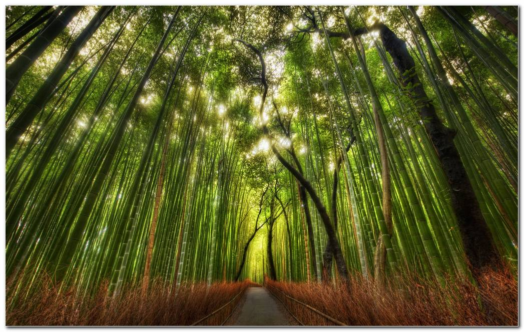 Bamboo Green Forest Nature Wallpaper Background