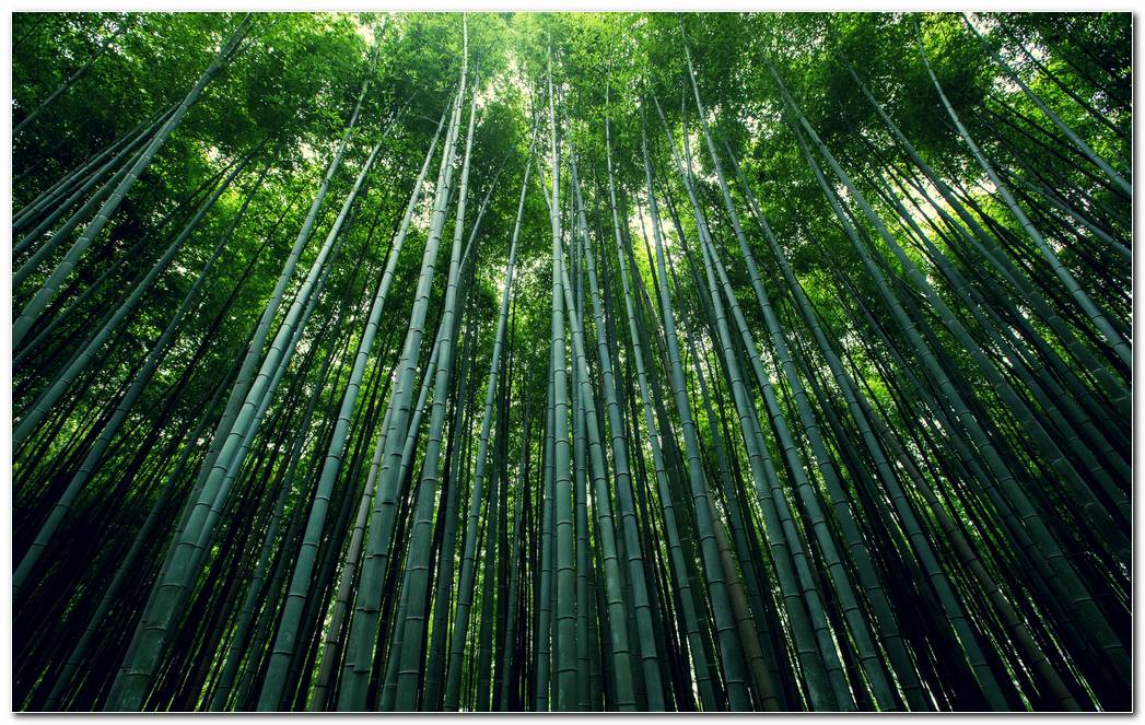 Bamboo Green Forest Wide Nature Wallpaper Background