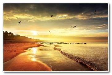 Beach Birds Seagulls Ocean Wallpaper 1920x1080 340x220
