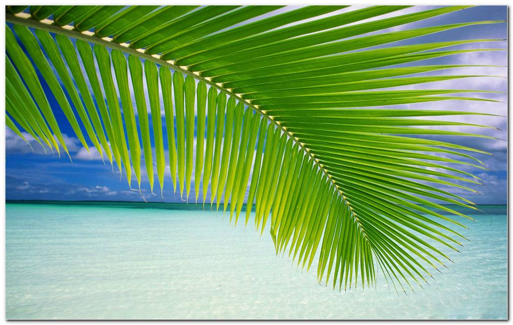 Beach Palm Leaf Wallpaper Image