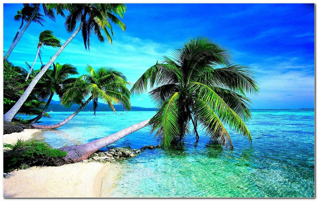 Beach Tropical Nature Wallpaper Background Image