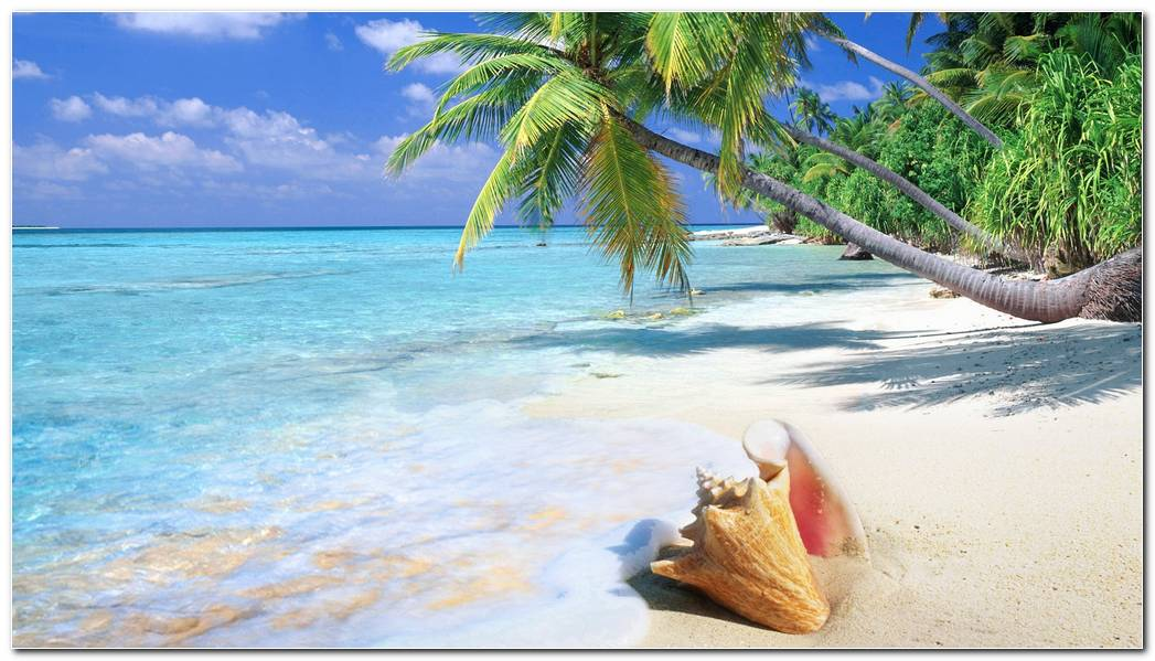 Beach Tropical Nature Wallpaper Background