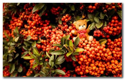 Bear Fruit HD Wallpaper