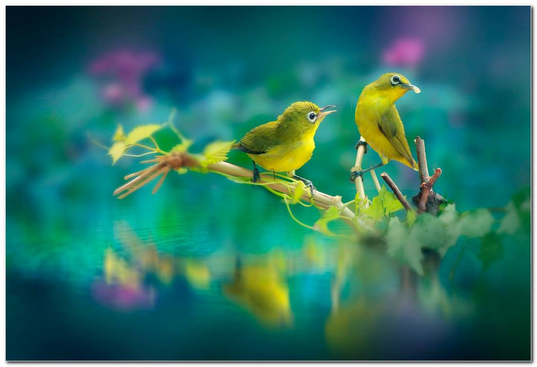 Beauitful Birds Animal Wallpaper Background