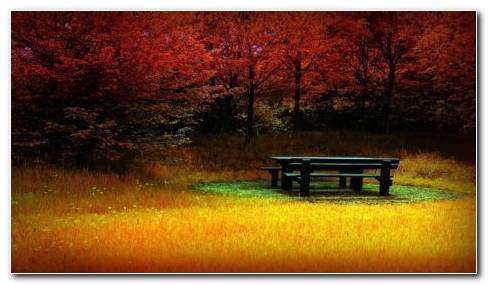 Beautiful Autumn HD Wallpaper