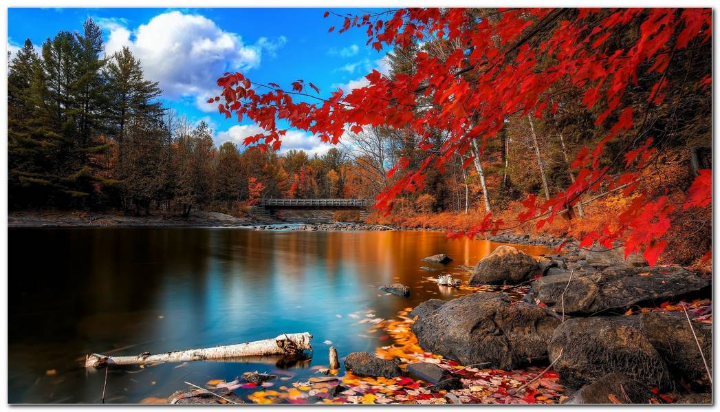 Beautiful Autumn Season Nature Wallpaper Background