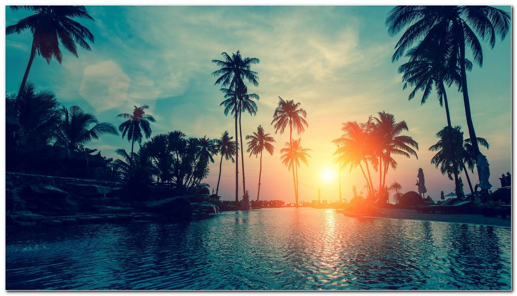 Beautiful Desktop Sunset Palm Tree Wallpaper Background