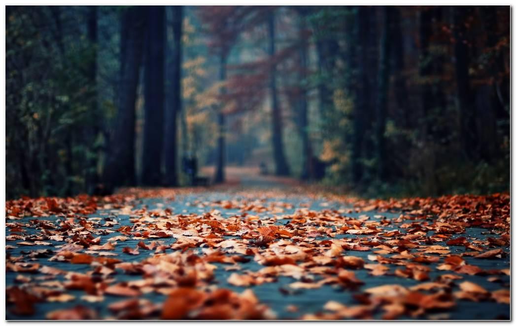 Beautiful Fall Leaves Autumn Season Nature Wallpaper Background