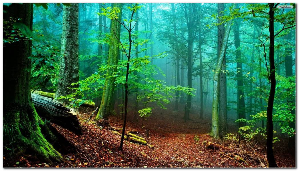 Beautiful Forest Backgrounds