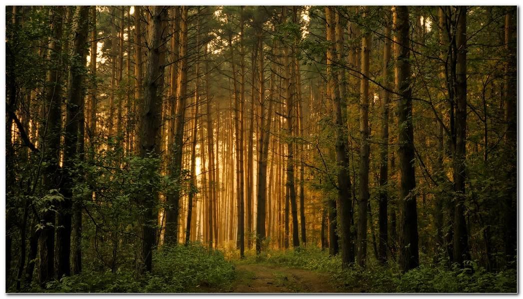 Beautiful Forest Desktop Backgrounds Wallpaper Picture