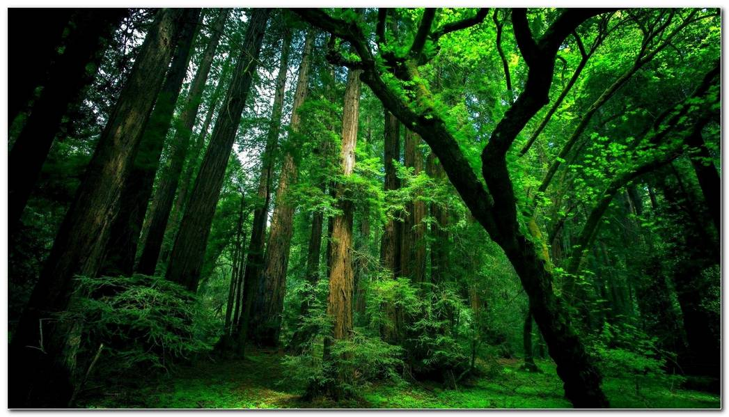 Beautiful Green Forest Nature Wallpaper Background Image
