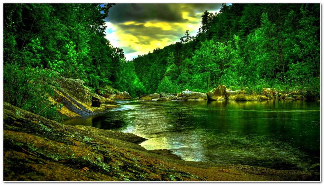 Beautiful Green Forest River Hdr Hd Desktop Background
