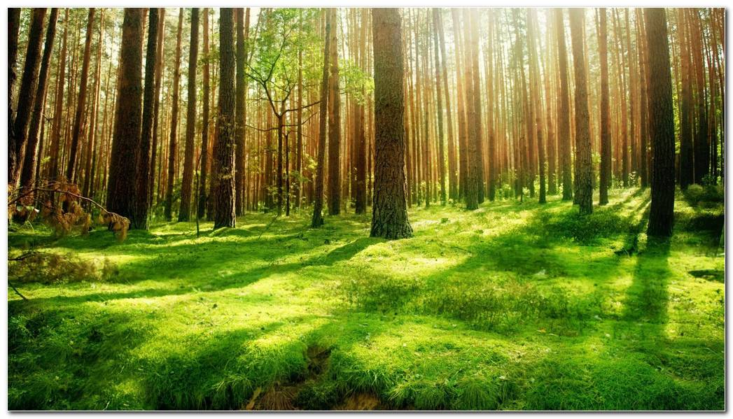 Beautiful Image Green Forest Nature Wallpaper Background