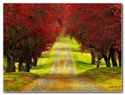 Beautiful Red Autumn Forest HD Wallpaper