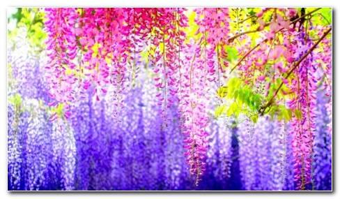 Beautiful Spring HD Wallpaper