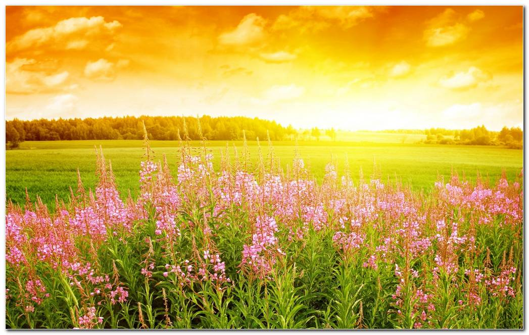 Beautiful Spring Wallpaper Background Widescreen