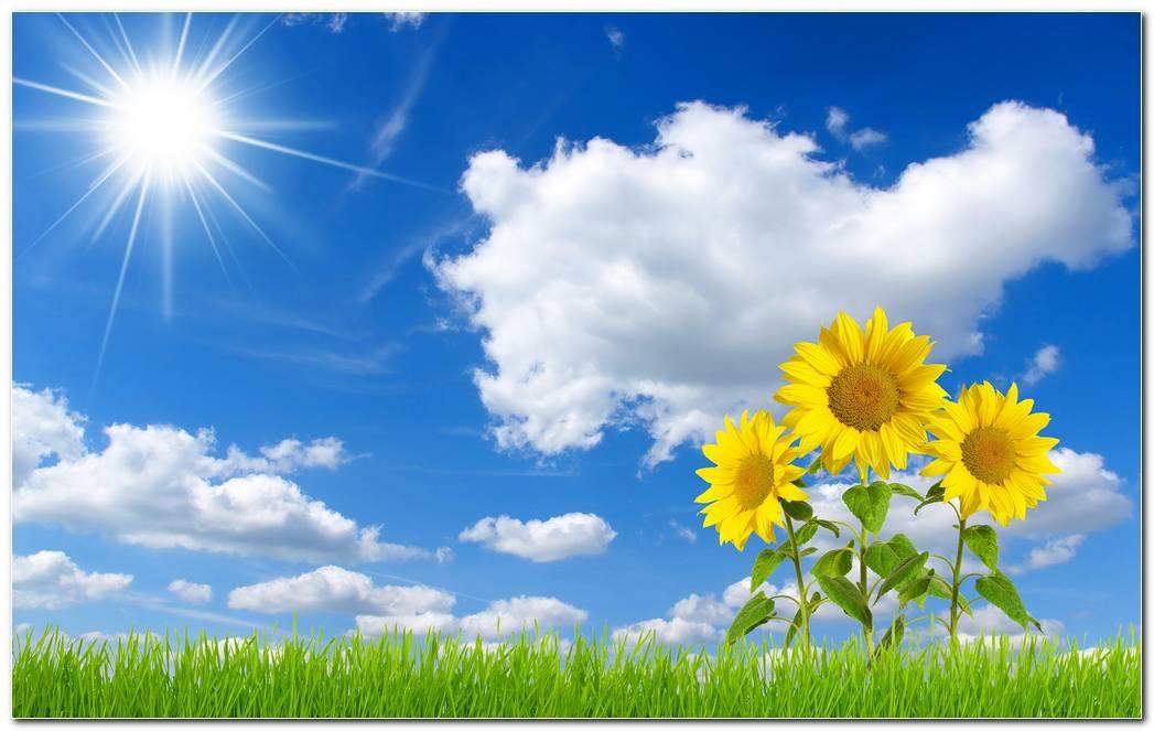 Beautiful Sunflower Nature Wallpaper Desktop Background