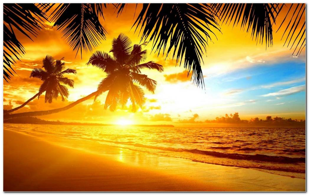 Beautiful Tropical Nature Wallpaper Background Image Desktop